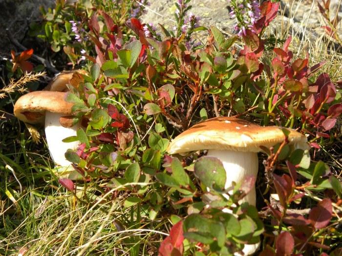 champignons-septembre.jpg