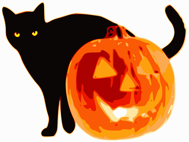 chat halloween citrouille